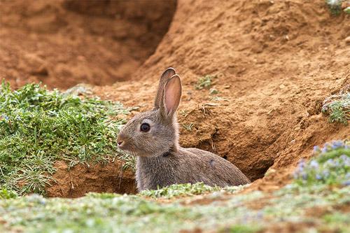 Подземные животные — кто живет под землей. Животные почвы
