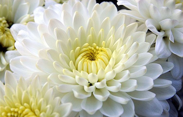 Augalai Yra Simboliai Skirtingose Pasaulio Salyse Medzio Ir Gėlių Horoskopai Pasaulio Simboliai Aprasymas